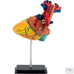 02101 Revell 1/2 Heart Anatomy Model Plastic Kit